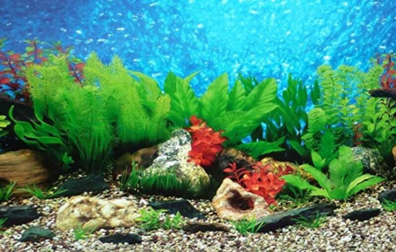 Best Fish Tank Substrate